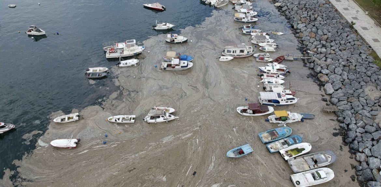 """Αυξάνεται η """"βλέννα"""" στη θάλασσα του Μαρμαρά"""